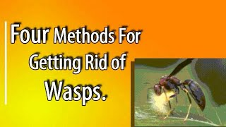 Four Ways To Elİminate Wasps Around Your Homestead