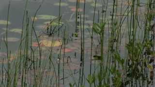 Noorwegen op muziek van Edvard Grieg:  de Peer Gynt suite. Film van Wiebe Schipmolder © 2007