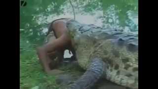 Животные против людей ,сумасшедшие животные