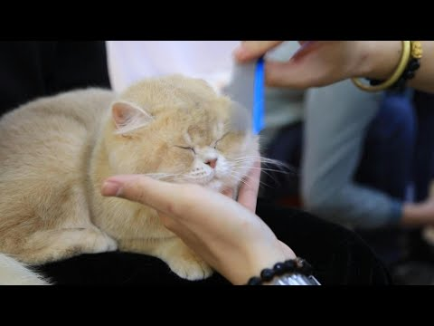 Vietnam holds first national cat show | AFP
