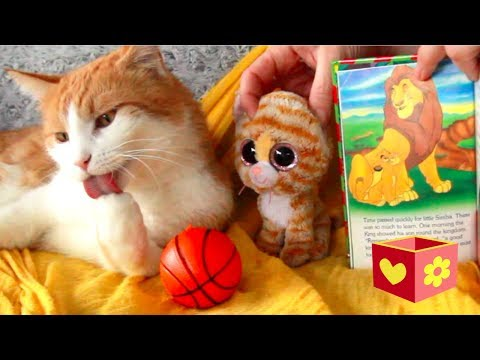 Simba and George cute cats | Bellboxes | Simba the king