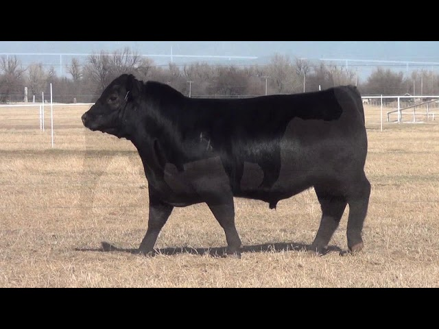 Express Ranches Lot 6