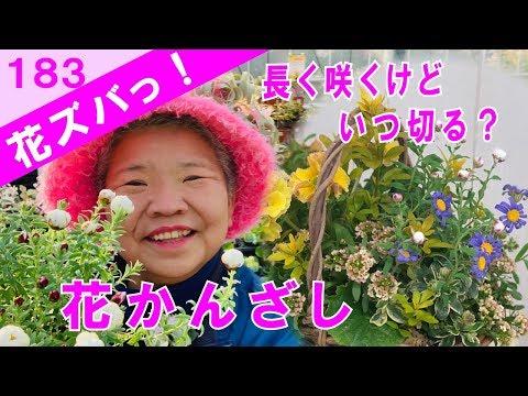 花かんざし長く咲くけどいつ切るのギャザリングの作り方花ズバっ183旬の花とその使いかた紹介/花創人ガーデニング教室