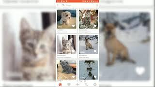 Поможем животным вместе.  Обзор приложения ЛАПКИ