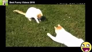 Смешные Видео   Самые смешные приколы про животных 2016 года #17