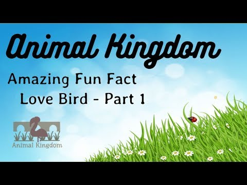 Animal Kingdom - Amazing Fun Fact about Love Bird – Part 1