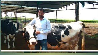 डेयरी फार्म स्टार्टअप  Basic Dairy Farm   तपशील रोहिदास सांगळे भाग -1 (मराठी)