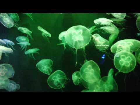 SEA Aquarium  Jellyfish - Universal Studios Singapore