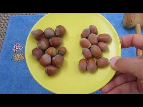 Вопрос: Почему лесные орехи пустые внутри?