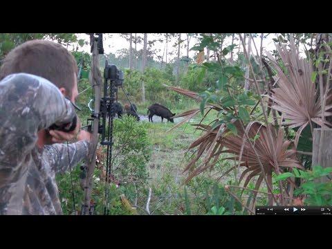 Rob's Archery Hog Hunt Clean Cook!!! Deer Meat For Dinner