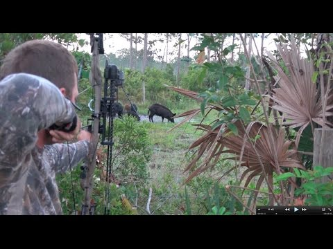 Robs Archery Hog Hunt Clean Cook!!! Deer Meat For Dinner