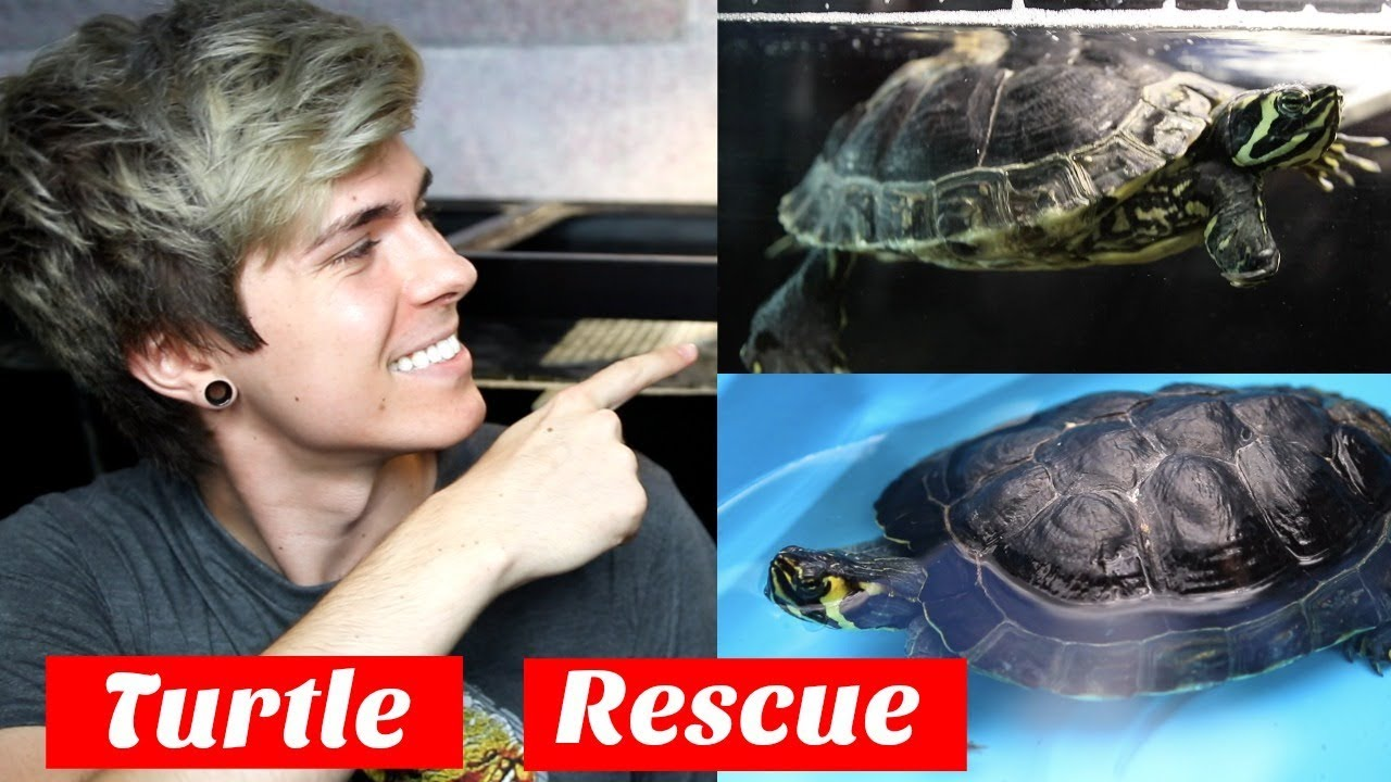 update-on-my-rescued-turtle-from-20-gallons-to-120-gallons