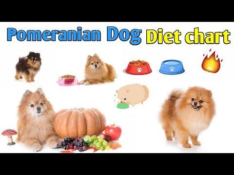 Pomeranian dog diet chart / In Hindi / Pomeranian dog diet plan