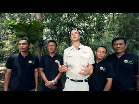 Australia Zoo protecting wild Sumatran tigers