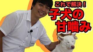 子犬の甘噛みの対処法を紹介。 叱る、体罰などを使わない方法で、子犬に...