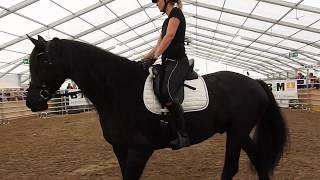 フリージアン・ホースの紹介3  Friesianhorse presentation 2019 0503