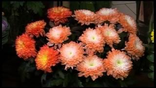 Ziedu veikals «Florinda»(, 2012-10-01T12:15:27.000Z)