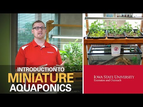 Aquaponics, Part 1: Benefits of an Aquaponic System