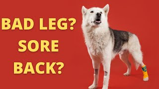 Grooming a pet with preexisting conditions: Feat. DR. Lisa Lippman DVM