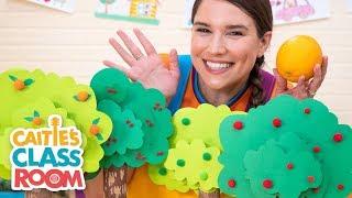 Caitie's Classroom Live  - Trees! | Preschool At Home