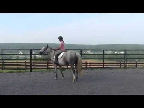 How to Stay on when your horse Freaks out!