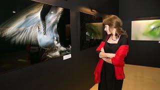 В Москве стартовал фестиваль «Золотая черепаха»