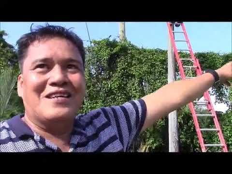 Big News Fiber Optic Cable From Tagbilaran City To Talibon Philippines Expat Foreigner