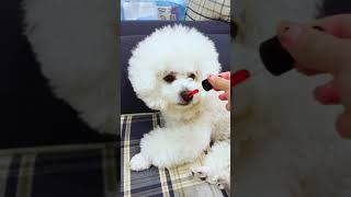 Look at these cute and funny puppies dogs 3193