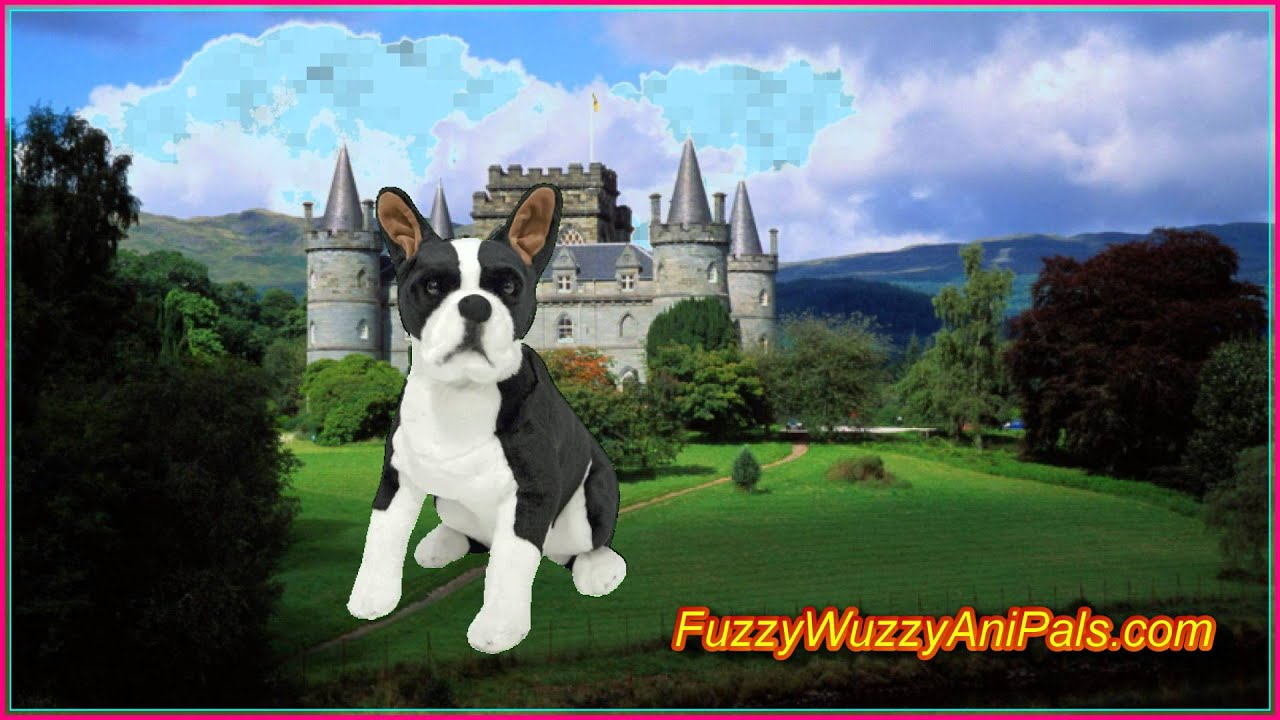 Plush Boston Terrier Lifelike Stuffed Animal Youtube