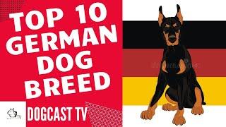 TOP 10 GERMAN DOG BREEDS! DogCastTV!