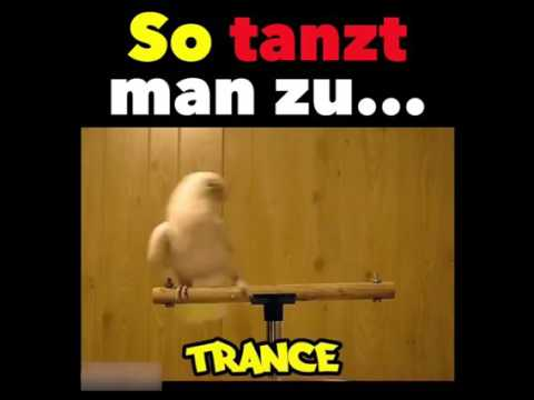 So tanz man zu... Vögel haben Rhythmus (Originalvideo unten in Beschreibung)