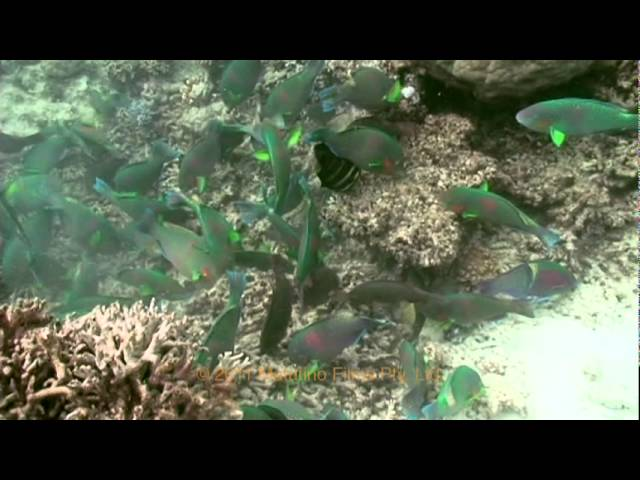 The Great Barrier Reef - Versão Portugues