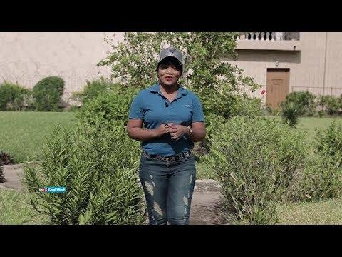 100% Coupé Décalé: 100% Gossip du 10 Novembre 2018 par Bamba Ami Sarah