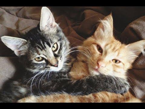 Кошки чувствуют добрых людей!