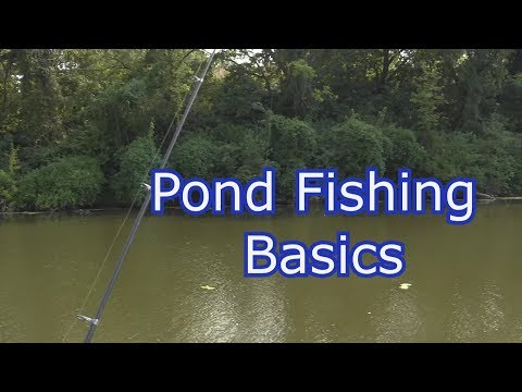 How To Fish A New Pond- Tips, Techniques, And Setups