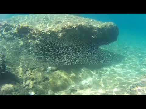 Snorkeling between thousands of fish in Kamenjak, coast of Istria, Croatia