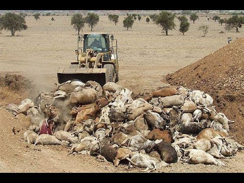 27 Dead People, MILLIONS of Dying Kangaroos - Can We Finally Spell 'FUKUSHIMA'?