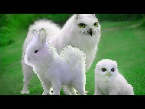 Гибриды животных необычные фантастические существа