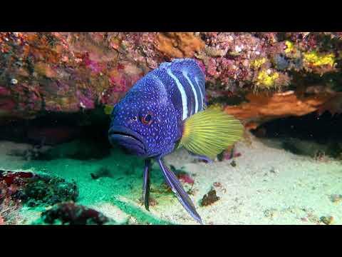 Blue Devil Fish Cave, 27 Jan 2018