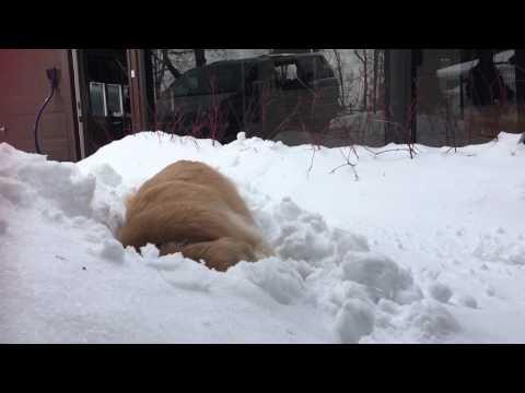 Smiley the Snowdog