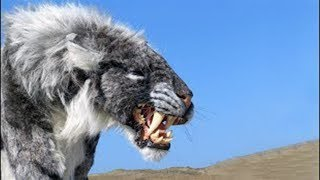 12 Most Dangerous Animals Living on Earth. - Wild Animals of Nature.