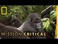 A Silverback Showdown Mission Critical