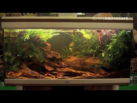 Biotope Aquarium Design Contest 2014 - the 2nd place, Africa