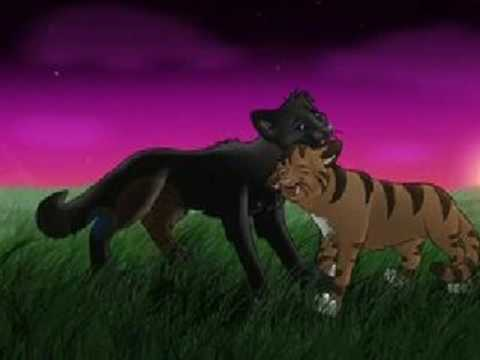 Leafpool- I must not chase the boys