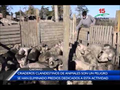 Cartavio criaderos clandestinos de animales son un for Criaderos de pescados colombia