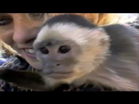 America's Funniest Home Videos S11E04 | OrangeCabinet