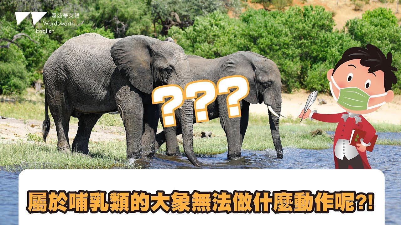 【渥茲華英語】- 威廉小百科 動物篇