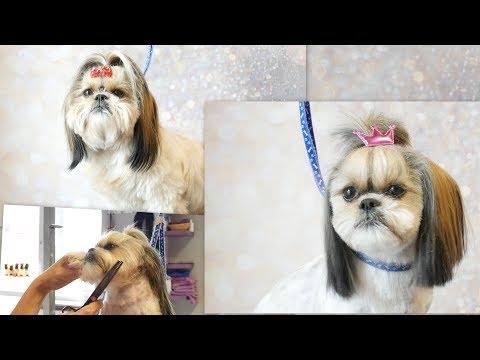 PetGroooming - Shih Tzu Head Grooming #72