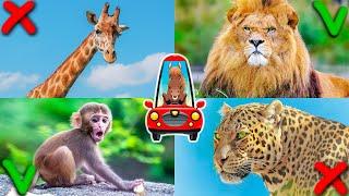 Дикие животные для детей. Звуки животных. Развивающее видео для малышей