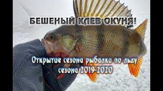 БЕШЕНЫЙ КЛЁВ ОКУНЯ Открытие по льду сезона 2019 2020